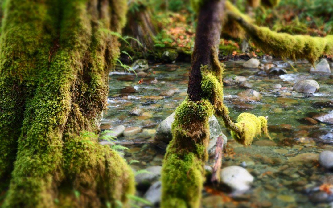 WEST's Green Infrastructure Team Wins Tualatin River Environmental Enhancement Grant