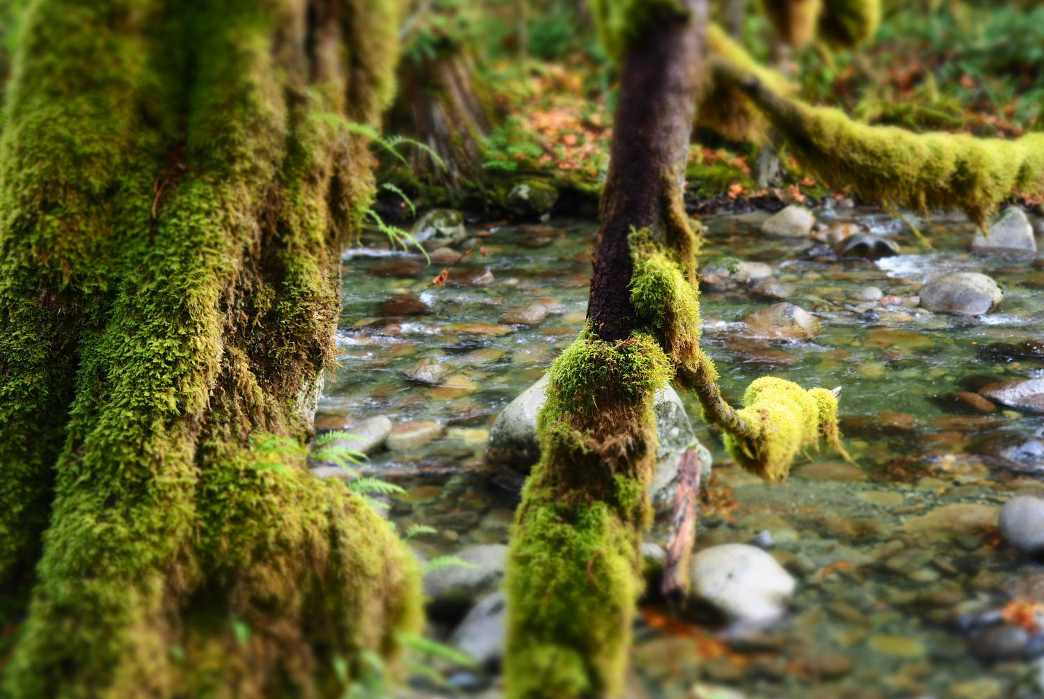 Moss used for green infrastructure